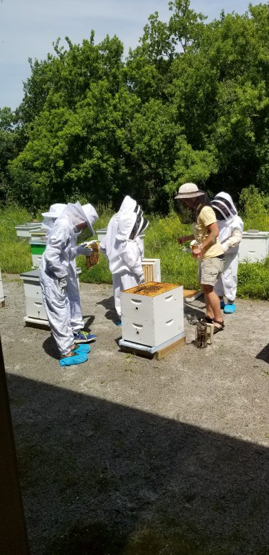 Young people learning about bee keeping at the Arboretum