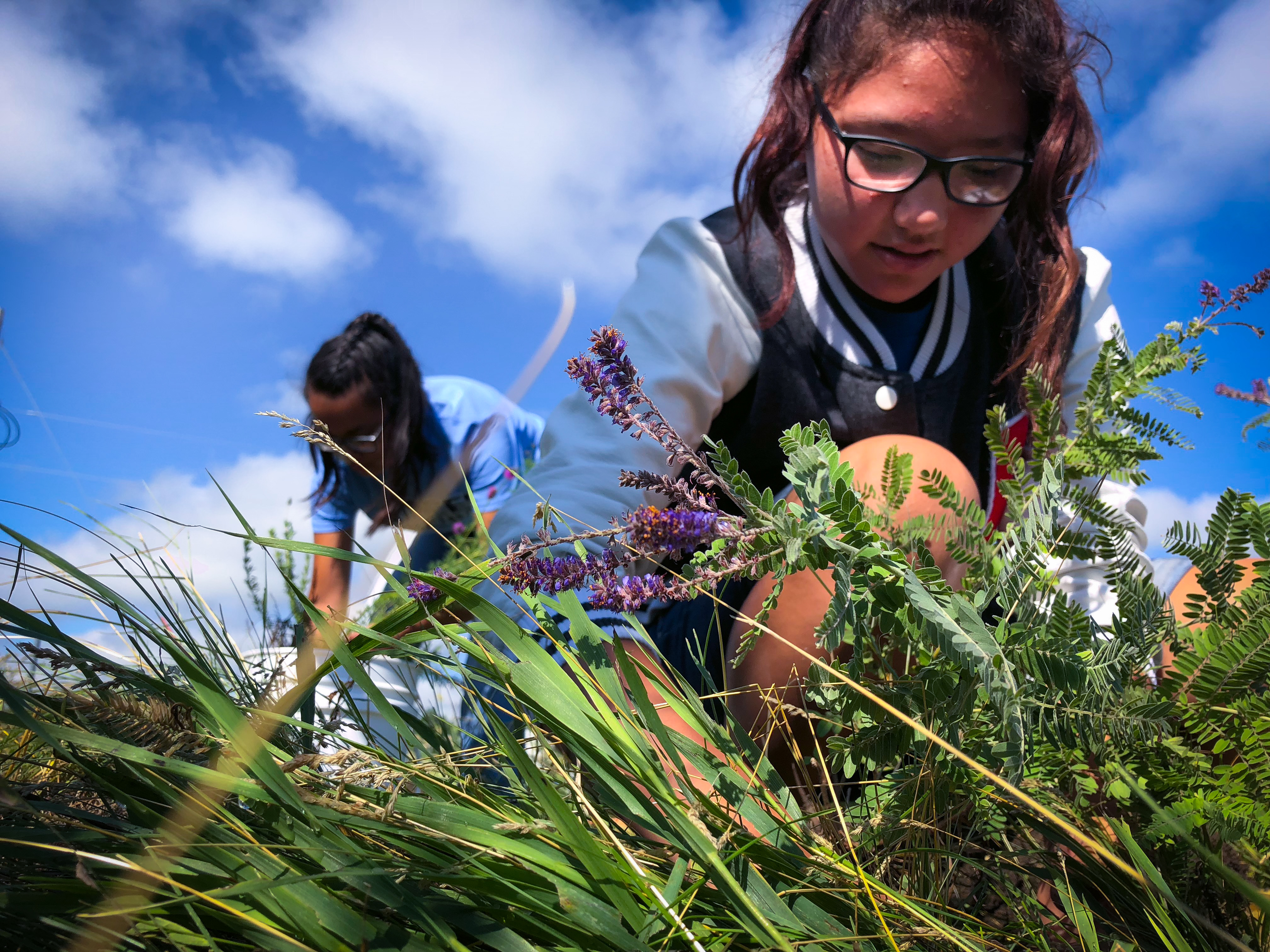 Lower Brule Research participant examines native plant